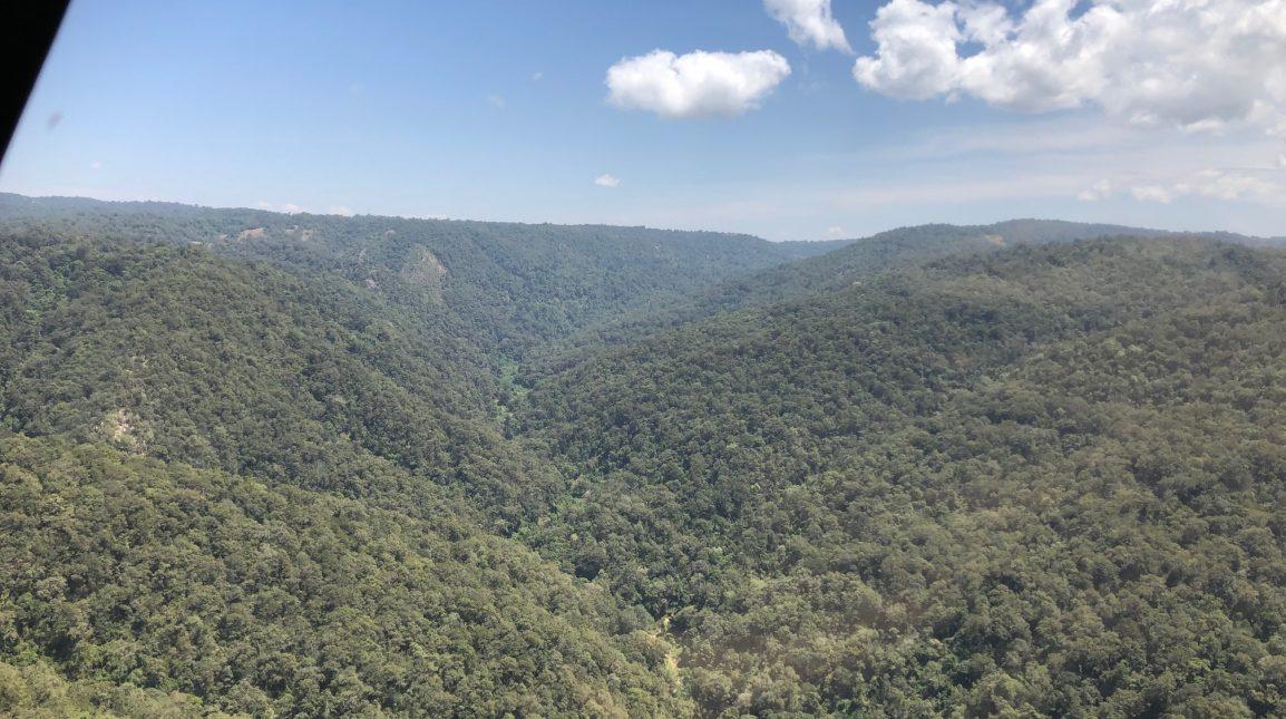 Skov fra helikopter